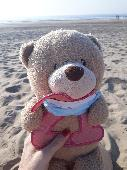 Lost Teddy bear on 26 Mar. 2021 @ Voorburg