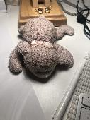 Lost Cuddly toy on 17 Apr. 2021 @ Palm Cove or Jetstar between Cairns and Melb