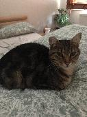 Lost Cat on 09 May. 2021 @ RG6 1AD