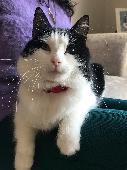 Lost Cat on 10 Apr. 2021 @ Bertram Road Enfield EN1