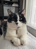 Lost Cat on 15 Nov. 2020 @ Hornbuckle Close, HA2 0YA ,Harrow