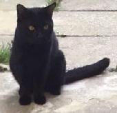 Found Cat on 08 Dec. 2020 @ IG1 3QT-mornington avenue