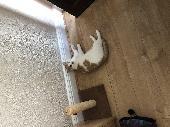 Lost Cat on 08 Jun. 2021 @ cv65gn