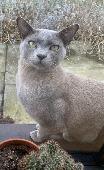 Lost Cat on 11 Jun. 2021 @ E8 , Dalston