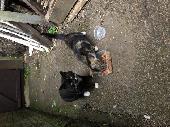 Found Cat on 20 Jun. 2021 @ cv65gn