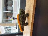 Found Cuddly toy on 04 Jul. 2021 @ Greg's, Burgess Hill
