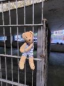 Found Teddy bear on 10 Jul. 2021 @ Tower Street car park, Winchester