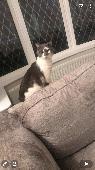 Lost Cat on 19 Jul. 2021 @ TS5 8PF