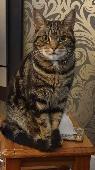 Lost Cat on 31 Aug. 2021 @ Green Lane, Stourbridge