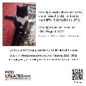 Lost Cat on 29 Aug. 2021 @ Hartcliffe Bristol