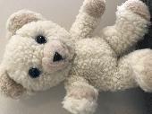 Found Teddy bear on 09 Apr. 2021 @ Rangeley, Maine